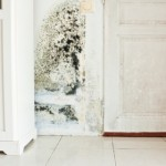 Testing for Black Mold Damage